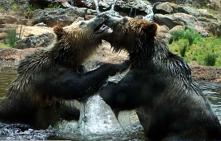 Daily Dose: Bears Fight Back