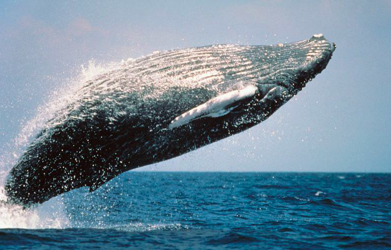 Daily Dose: Whales Moving