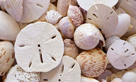 Daily Dose: Sand Dollars