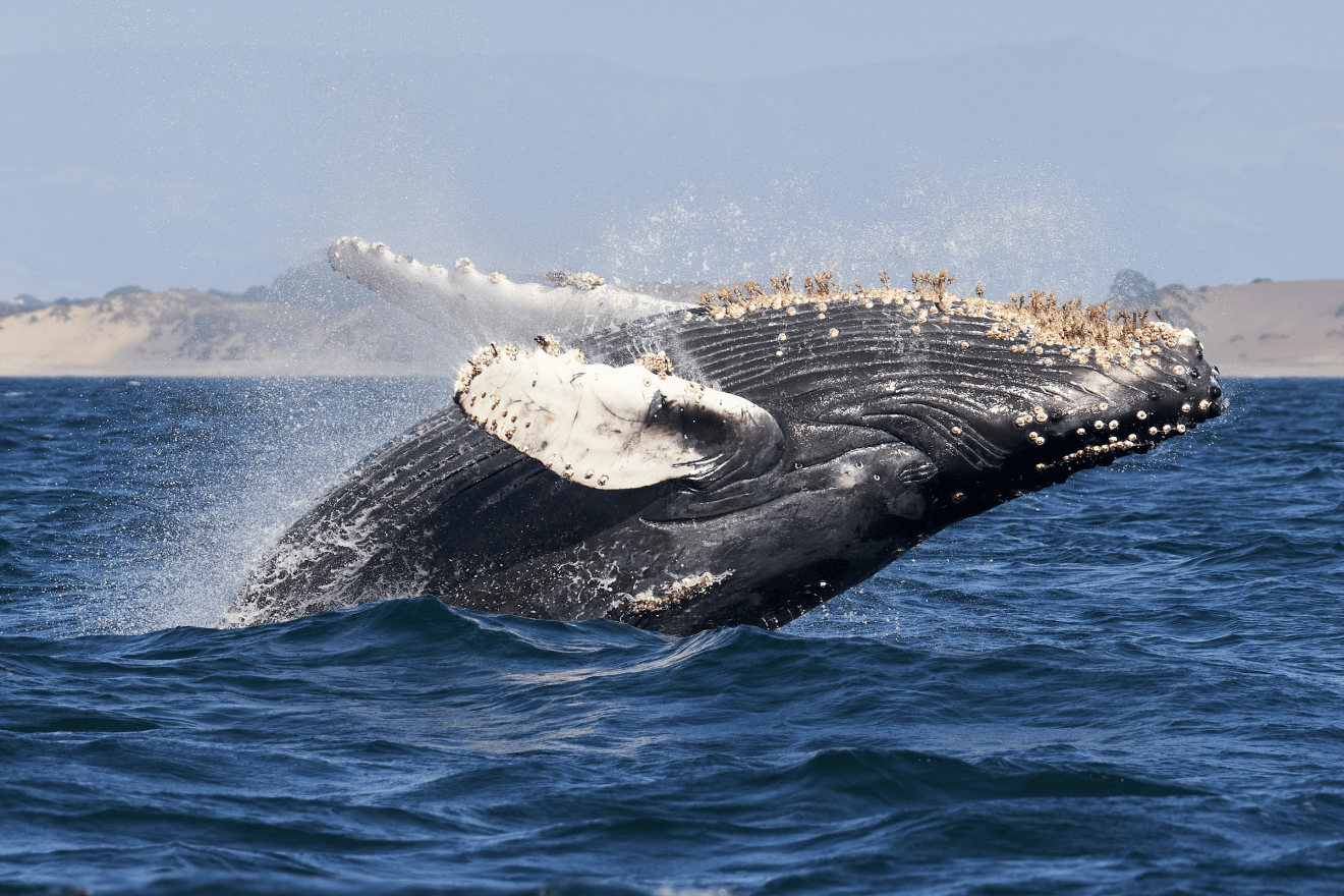Why You Need to go Whale Watching