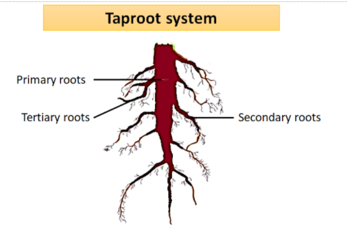 Daily Dose: Taproot Grassroots