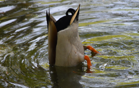 Daily Dose: Bottoms up!