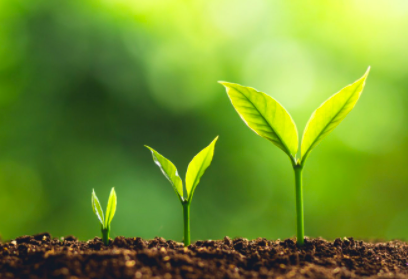 Daily Dose: Growth, Growth, Growth